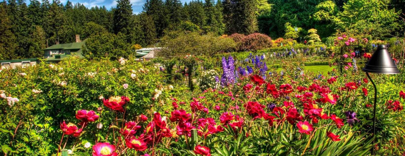 Jardiner a y ornamentacion grupo jomar for Ornamentacion de jardines